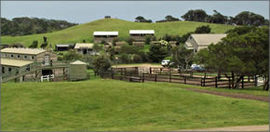 Ace Hi Riding Ranch - Accommodation Sydney