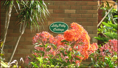 Lillypilly - Accommodation Sydney