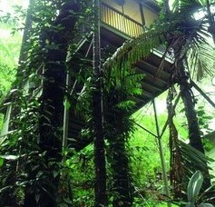 Daintree Eco Lodge And Spa - Accommodation Sydney