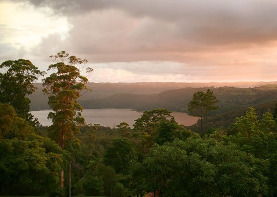 Montville Misty View Cabins - Accommodation Sydney