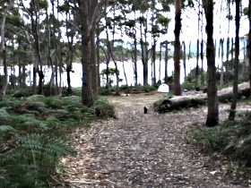Camping At Bruny Island - Accommodation Sydney