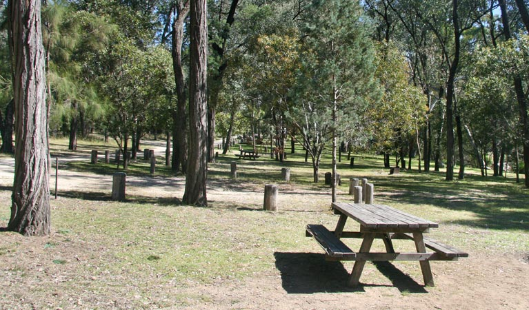 Lemon Tree Flat campground - Accommodation Sydney