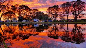 Coonawarra Bush Holiday Park - Accommodation Sydney