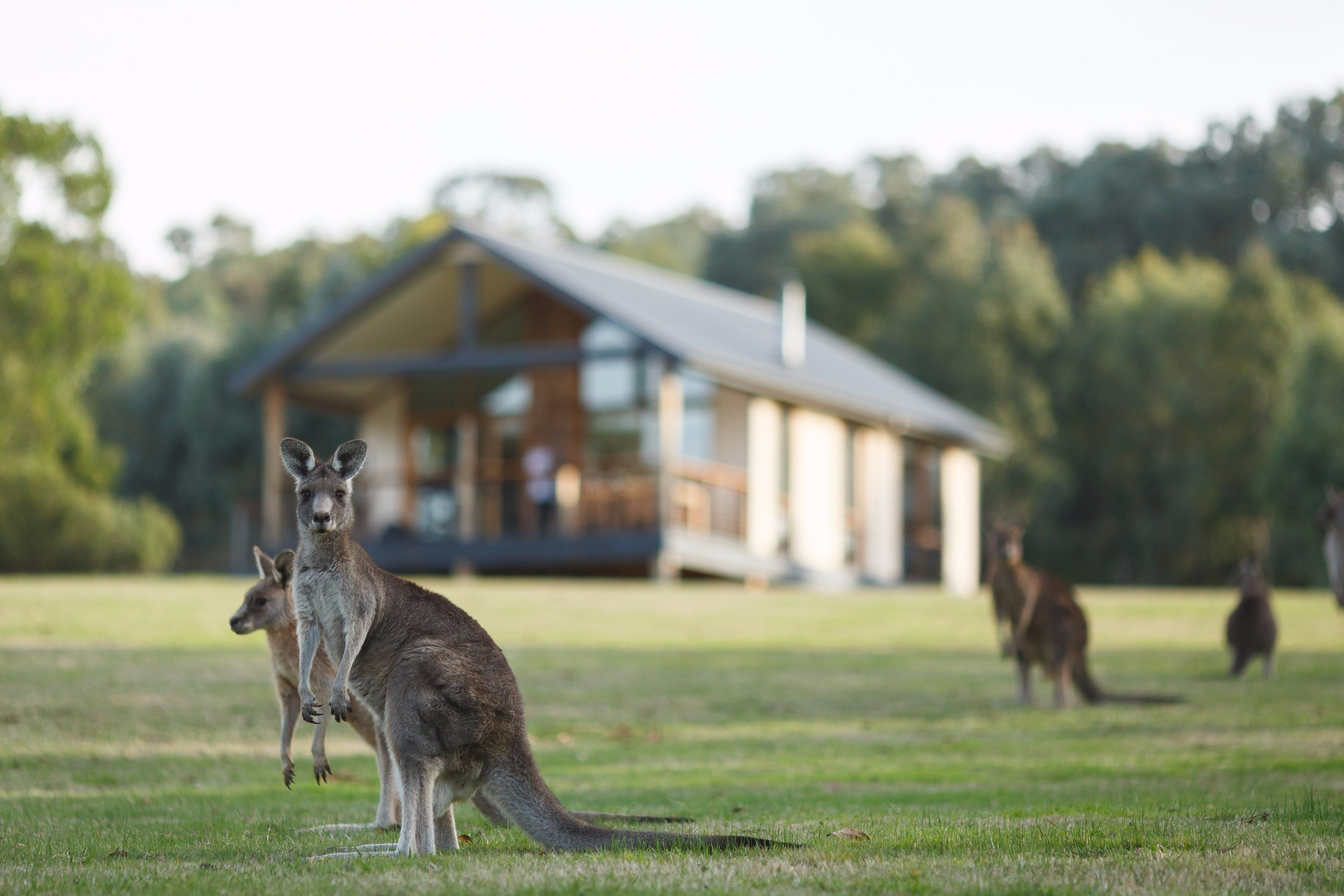 Yering Gorge Cottages - Accommodation Sydney