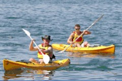 Manly Kayaks - Accommodation Sydney