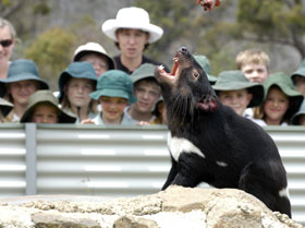 Tasmania Zoo - Accommodation Sydney