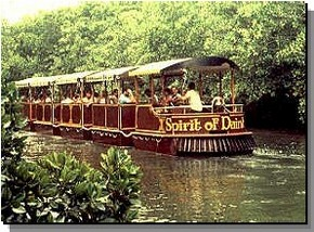 Daintree Rainforest River Trains - Accommodation Sydney