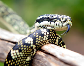 Reptile Encounters - Accommodation Sydney