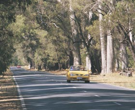 Ludlow Tuart Forest - Accommodation Sydney