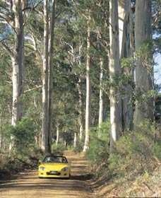 Mount Shadforth Scenic Drive - Accommodation Sydney