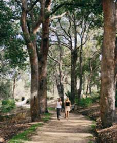 Law Trail and Lotterywest Federation Walkway Kings Park - Accommodation Sydney