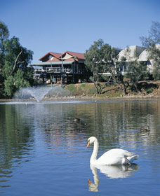 White Swans - Accommodation Sydney