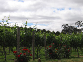 Manyara Vineyard - Accommodation Sydney