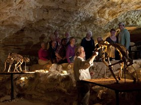 Naracoorte Caves National Park - Accommodation Sydney