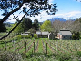 Wilmot Hills Vineyard - Accommodation Sydney