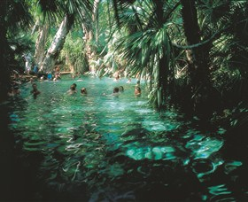 Mataranka Thermal Pool - Accommodation Sydney