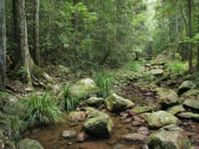 Amamoor State Forest - Accommodation Sydney