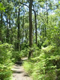 Mapleton Falls National Park - Accommodation Sydney