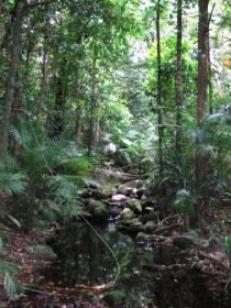 Mossman Gorge Rainforest Circuit Track Daintree National Park - Accommodation Sydney