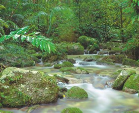 Mossman Gorge Daintree National Park - Accommodation Sydney