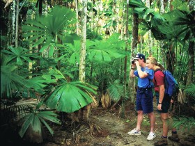 Mount Sorrow Ridge Trail Daintree National Park - Accommodation Sydney