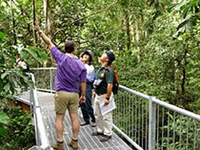 Daintree Discovery Centre - Accommodation Sydney