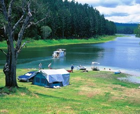 Danbulla National Park and Danbulla State Forest - Accommodation Sydney