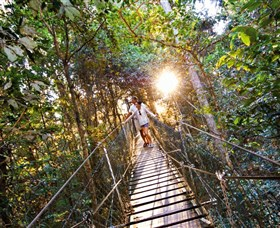 Tree Top Walkway - Accommodation Sydney