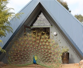 Halls Gap Zoo - Accommodation Sydney