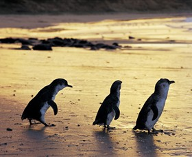 Phillip Island Nature Park - Accommodation Sydney