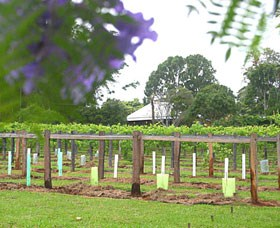 Douglas Vale Historic Homestead  Vineyard - Accommodation Sydney