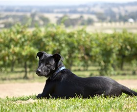 Moothi Estate Vineyard and Cellar Door - Accommodation Sydney