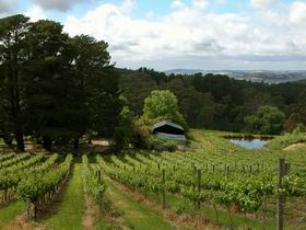 Arranmore Wines - Accommodation Sydney