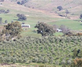 Wymah Organic Olives and Lambs - Accommodation Sydney
