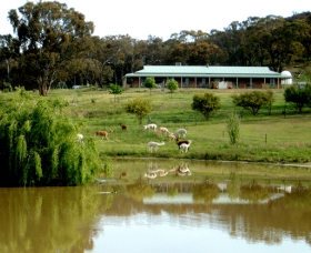 Clearview Alpacas - Accommodation Sydney