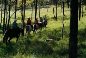 Hunter Valley Horse Riding and Adventures - Accommodation Sydney