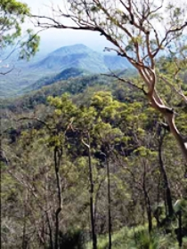 Crediton State Forest - Accommodation Sydney