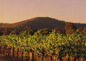 Taltarni Vineyards - Accommodation Sydney