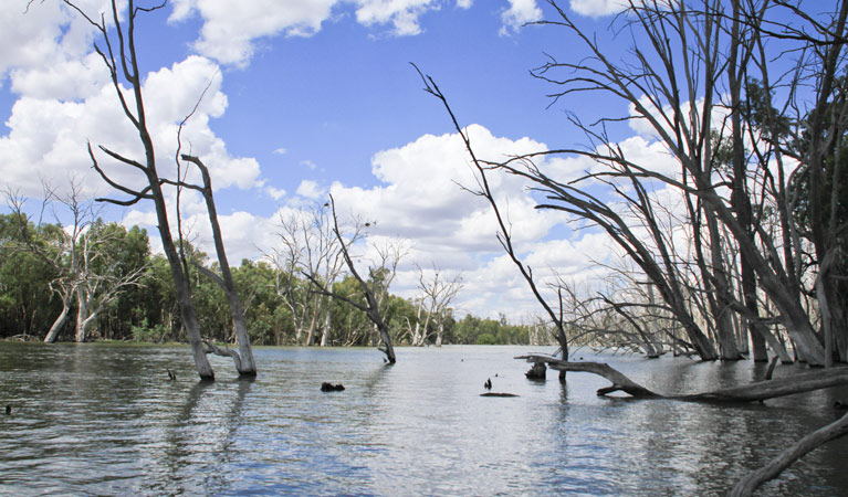Murrumbidgee Valley National Park - Accommodation Sydney