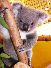Cooberrie Park Wildlife Sanctuary - Accommodation Sydney