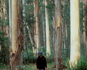 Blue Gum Forest - Accommodation Sydney