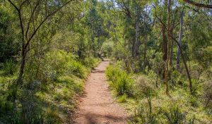 Mares Forest Creek walking track - Accommodation Sydney