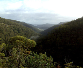 Nattai Gorge Lookout - Accommodation Sydney