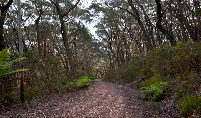 Budawang National Park - Accommodation Sydney