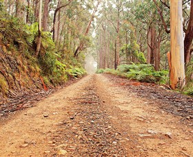 Cycle Mogo State Forest - Accommodation Sydney