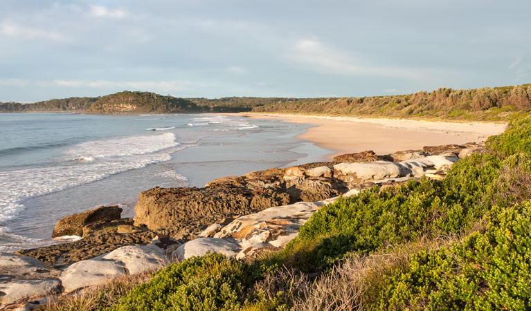 Burrawang track - Conjola Beach to Buckleys Point - Accommodation Sydney