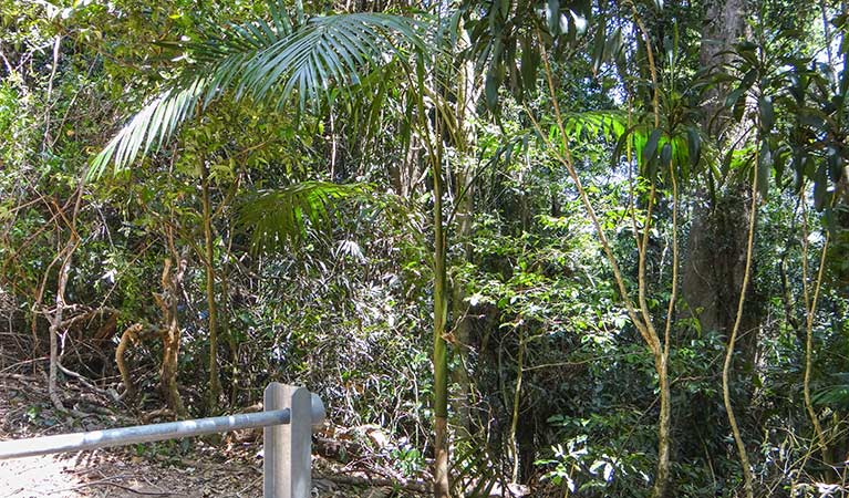 Goorgana walking track - Accommodation Sydney