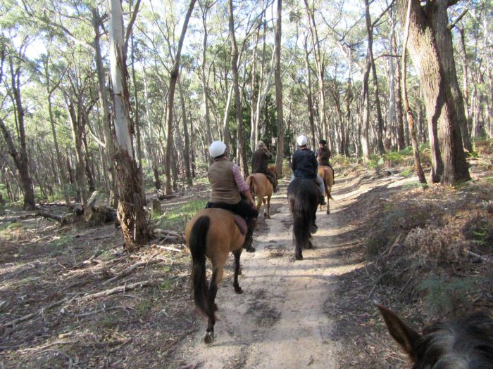 Silver Brumby Trails - Accommodation Sydney