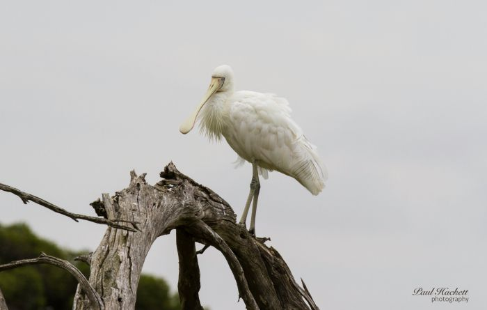 Melbourne Birding Tours - Accommodation Sydney