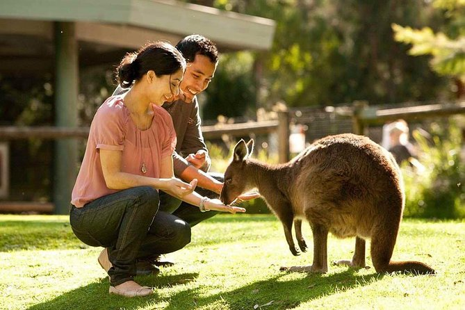 Very Best of Perth Tour - Wildlife Park  City Highlights Tour - Accommodation Sydney